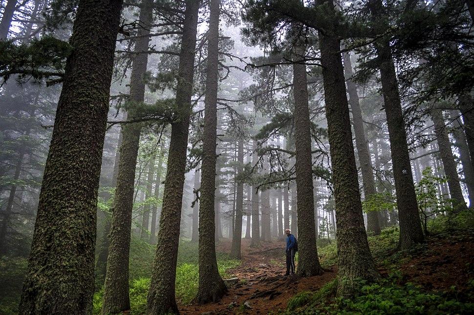 Во шумата на Баба 2015