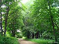 В парке - panoramio (17).jpg