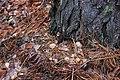 Глибокий ліс IMG 4280.jpg