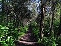 Дендрологічний парк, Довгинцівський район 14.JPG