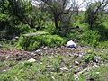 Дендрологічний парк 104.jpg