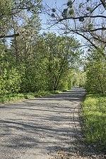 Дорога через лес.jpg