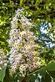 Квітнуть дерева 01.jpg