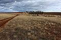 Лесопосадка с южной стороны дороги - panoramio.jpg