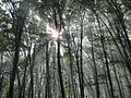 Медобірський ліс.JPG