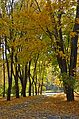 Наводницький парк восени 01.jpg