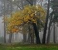 Осінній туман в Козлинському лісі.jpg