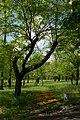 Парк Победы - 3.jpg