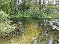 Пенцево. Река Корень. 2 фото..jpg
