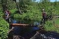 Река Липша (приток Большой Кокшаги) 03.jpg