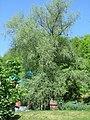 Родник. Поездка на святой источник. Билярск. Татария. Май 2013 - panoramio.jpg