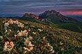 Рододендроны Большого Тхача.jpg