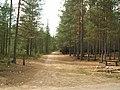 Скамейка на перекрестке .2006 сентябрь после низового пожара - panoramio.jpg