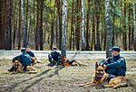 Собаки НГУ 5207 (19348599112).jpg