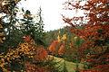 Яворів восени.JPG