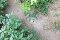 آدمک خندان در باغچه - panoramio.jpg