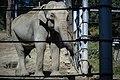 حیوانات باغ وحش مرکزی شهر تفلیس پایتخت گرجستان 42.jpg