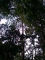 ต้นไม้สวยมาก - panoramio.jpg