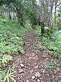 เส้นทางเดินศึกษาธรรมชาติวนอุทยานแห่งชาติพุม่วง.jpg