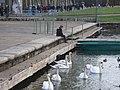 ヴェルサイユ宮殿の池で - panoramio.jpg