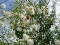 不知名的树上的花.jpg