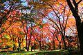北の丸公園モミジ園 - panoramio.jpg