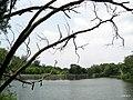 厦大水库(情人谷) - panoramio (5).jpg