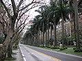 台北市街景攝影 - panoramio - Tianmu peter.jpg