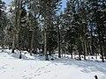 四川 理县-毕棚沟 林海雪原 - panoramio.jpg
