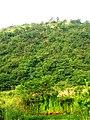 昭关镇乌龟山下山经过的树林 - panoramio.jpg