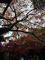 秋葉 - panoramio.jpg