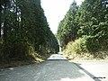 箱根やまなみ林道 - panoramio (4).jpg