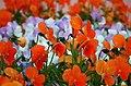 花壇 Flower Bed - panoramio.jpg