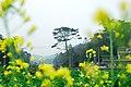 花都之旅 - panoramio (3).jpg