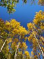 金秋 - Golden Autumn - 2012.09 - panoramio.jpg