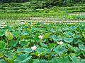 雙溪蓮花園 Shuangxi Lotus Garden - panoramio.jpg