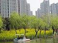 马鞍池公园的油菜花园 - panoramio.jpg