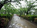 鶴岡八幡宮の段葛 - panoramio.jpg