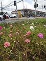 0305jfOrtigas Avenue Santolan Road Streets Landmarks San Juan Quezon Cityfvf 14.jpg