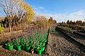 079 Golkhaneh Bostan Alavi گلخانه های قم در فصل بهار، بوستان علوی.jpg