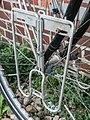 08-08-23-fahrrad-knackt-03-RalfR.jpg