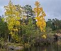 10 Осень на Валааме. Берег Монастырской бухты 2.jpg