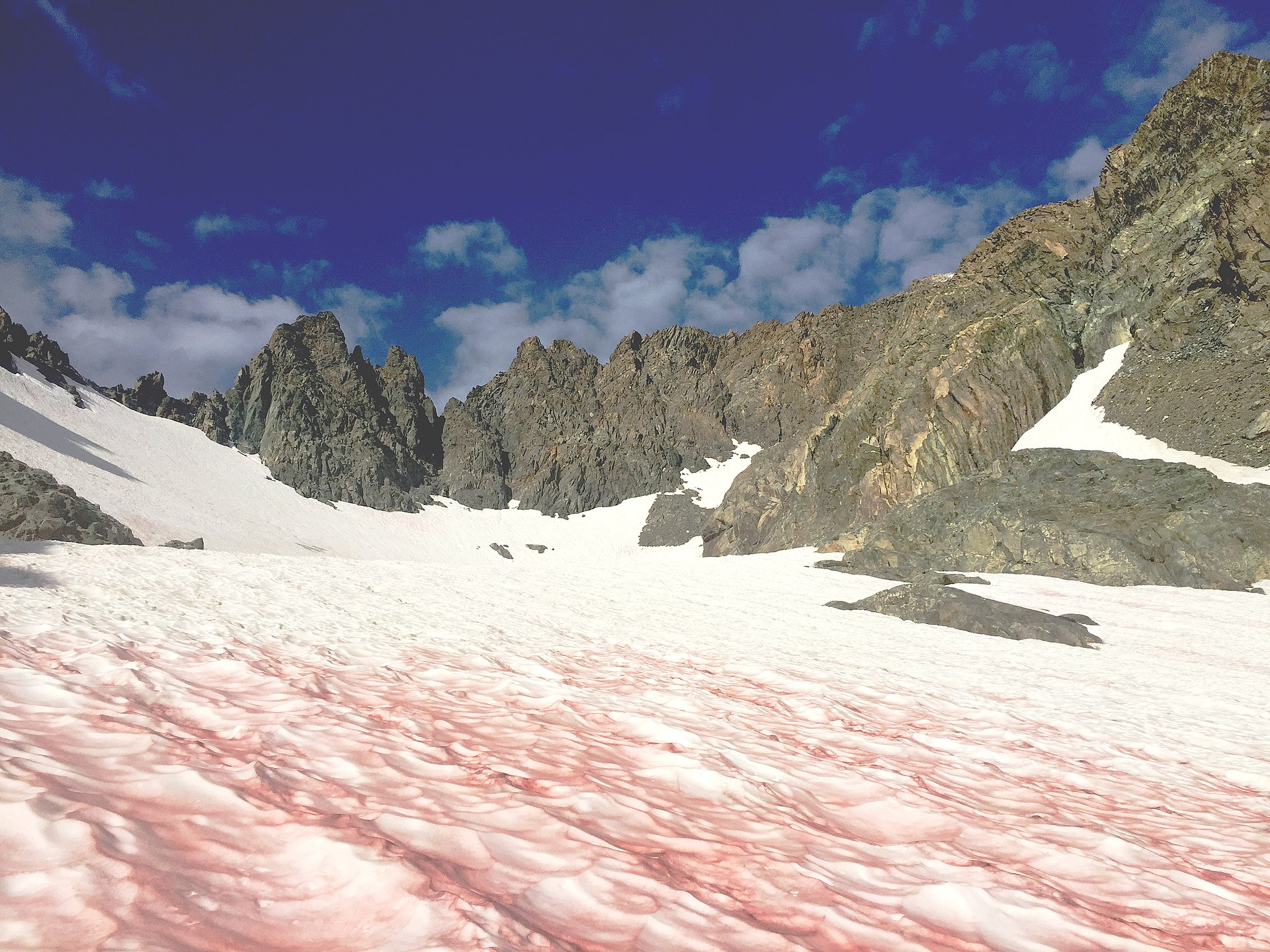 """""""Glacier Blood"""" Threatens Mountain Ecosystems as High Altitude Temperatures Rise"""