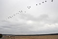 173rd Airborne Brigade trains at JMTC 150225-A-BS310-091.jpg