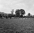 1958 visite d'une délégation INRA au Haras du Pin Cliché Jean Joseph Weber-3-1.jpg