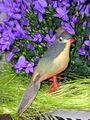 1flowernbird.jpg