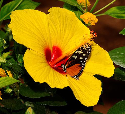2011-08-08 14-58-39-papillon-hunawihr.jpg