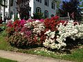 2014-05-17 10 23 45 Multi-colored Azaleas in front of an old house on Spruce Street (Mercer County Route 613) in Ewing, New Jersey.JPG