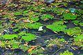 2016 Singapur, Ogrody botaniczne (239).jpg