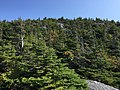 2017-09-11 11 16 40 View east along the Maple Ridge Trail at about 3,260 feet above sea level on the western slopes of Mount Mansfield within Mount Mansfield State Forest in Stowe, Lamoille County, Vermont.jpg